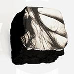 Accueil Femme fossile Autoportrait