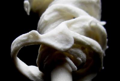 Quenouille : Macro, tirage numérique 60 x 130 cm.